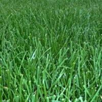 Mieszanki nasion na trawniki