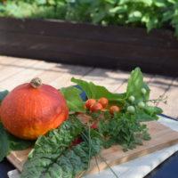 Nasiona do warzywnika