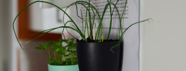 Sposób na zioła w doniczkach w kuchni