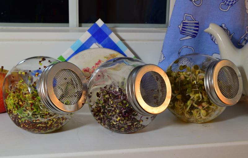 3 słoiki na kiełki z różnymi rodzajami kiełków: fasolą, brokułem i kapustą