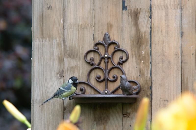 Poidełko dla ptaków z sikorką