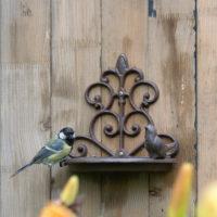 Poidełko dla ptaków