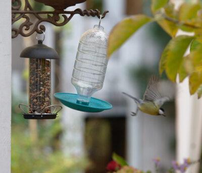 Ptak porusza poidełkiem wzbijając się do lotu