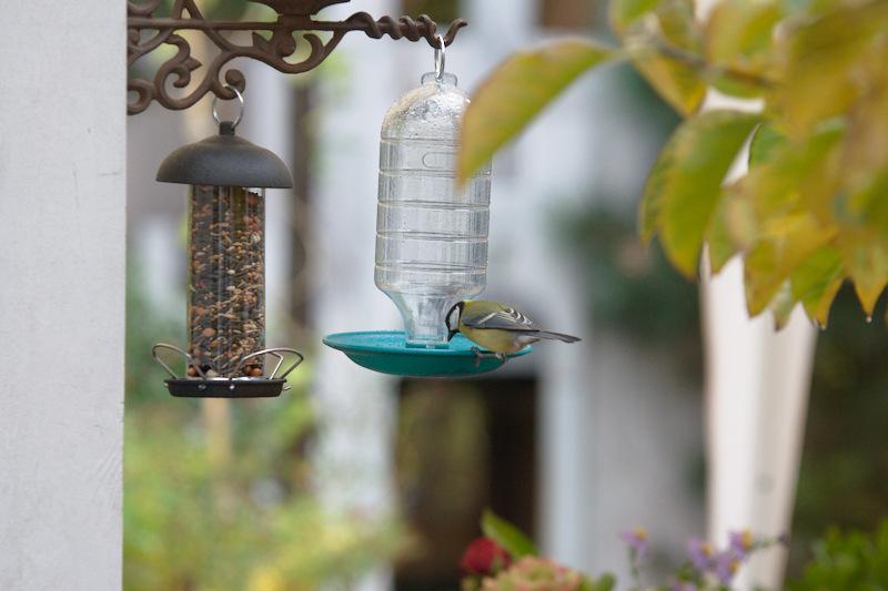 Ptak pije wodę z poidełka automatycznego