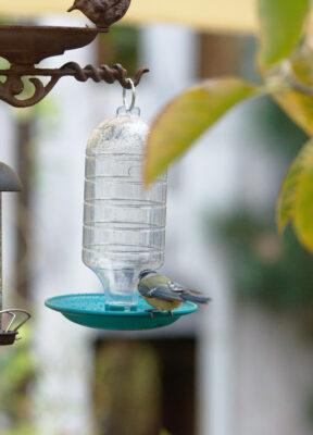 Poidełko dla ptaków automatyczne