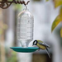 Automatyczne poidełko dla ptaków