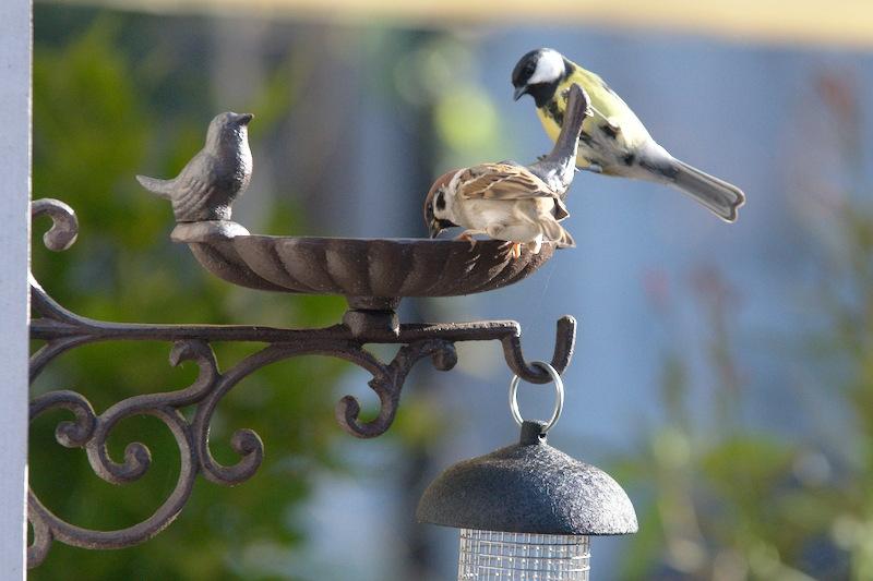 Czy ptaki korzystają z poidełek?