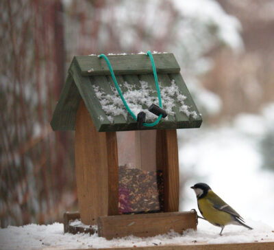 Dokarmianie ptaków na wsi