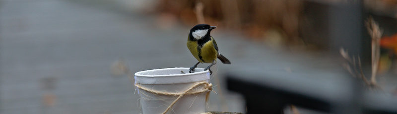 Jak zwabić ptaki do ogrodu?