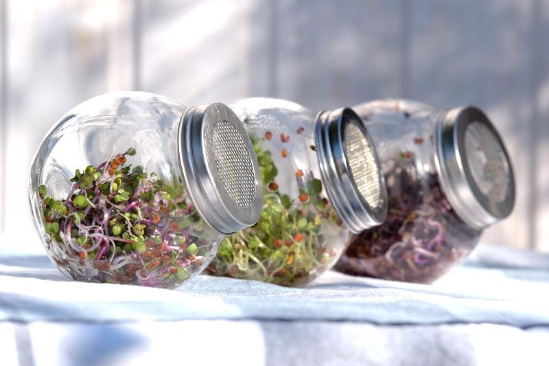 Kiełkowniki ze szkła