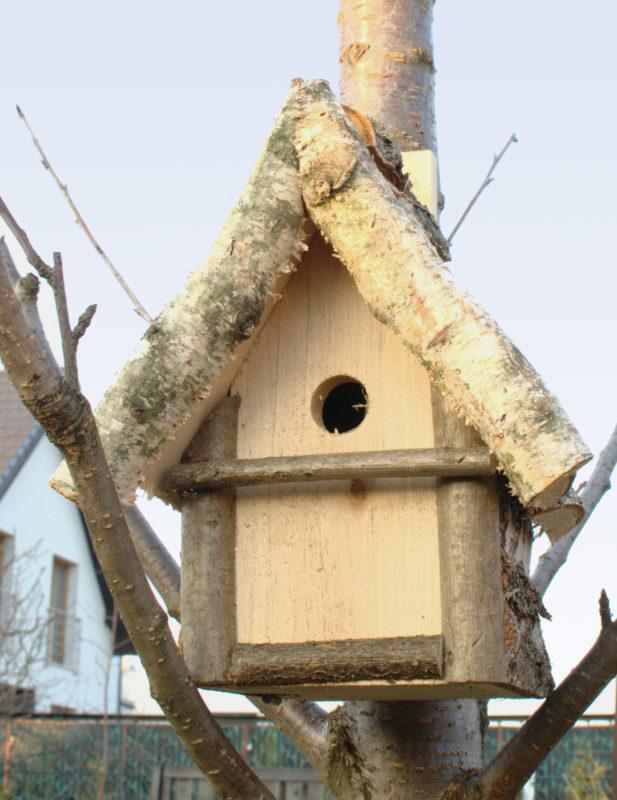 Budka lęgowa brzozowa ręcznie wykonana w Polsce na drzewie