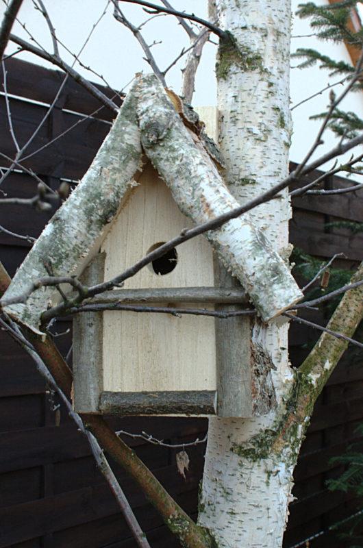 Budka lęgowa ręcznie wykonana w Polsce z brzozy dla sikorek na brzozie