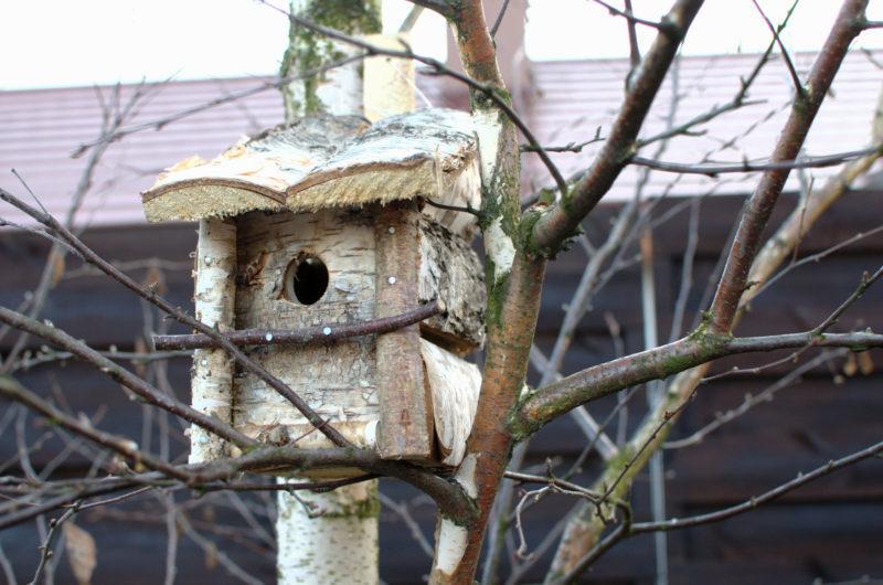 Na drzewie budka lęgowa z brzozy ręcznie wykonana w Polsce otwierana do czyszczenia naturalny wygląd