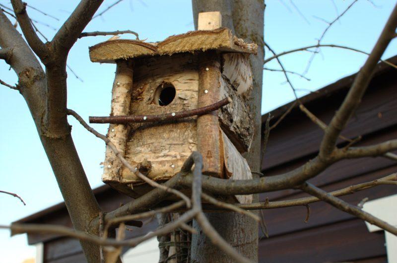 Budka lęgowa z brzozy ręcznie wykonana w Polsce otwierana do czyszczenia naturalny wygląd
