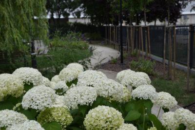 W tym ogrodzie wykonujemy usługi ogrodnicze, czyli pielęgnacje zieleni.