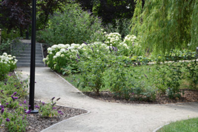 ogród w parku