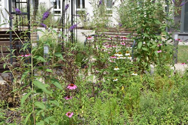 Pełen zapachów ogród ziołowy jest bardzo ożywionym fragmentem ogrodu.