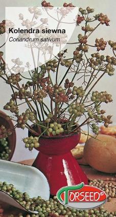 Nasiona kolendry siewnej kolendra