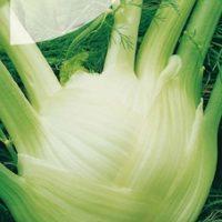 Fenkuł nasiona