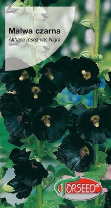 Nasiona malwy czarnej malwa czarna