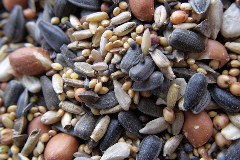 Pokarm dla ptaków porcja zdrowia z ostropestem