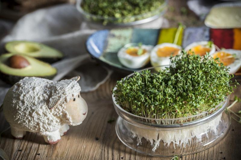 Rzeżucha na Wielkanoc w szklanej kiełkownicy z sitkiem