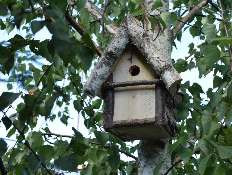 Brzozowa budka doskonale komponuje się z drzewem brzozy, na którym została powieszona