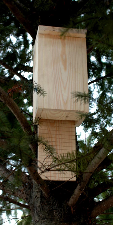 Drewniana budka dla nietoperzy na drzewie w ogrodzie
