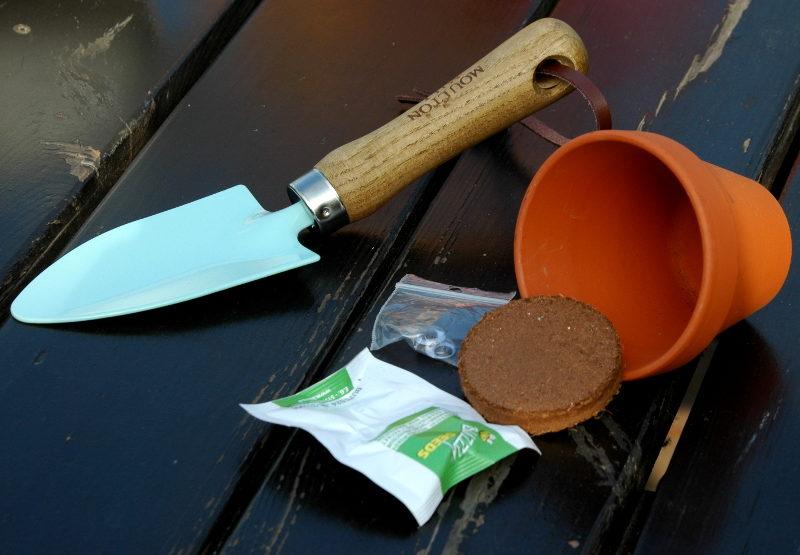 Zawartość opakowania dynia w doniczce: nasiona, sprasowane podłoże, śmieszne oczka, doniczka ceramiczna.