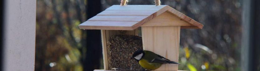Czy trzeba dokarmiać ptaki? 1