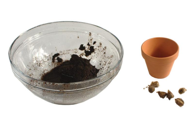 Sprasowane podłoże namoczone, doniczka, cebulki