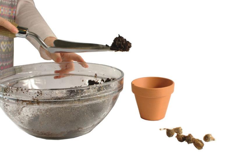Przekładanie ziemi metalową łopatką do doniczki i cebulki