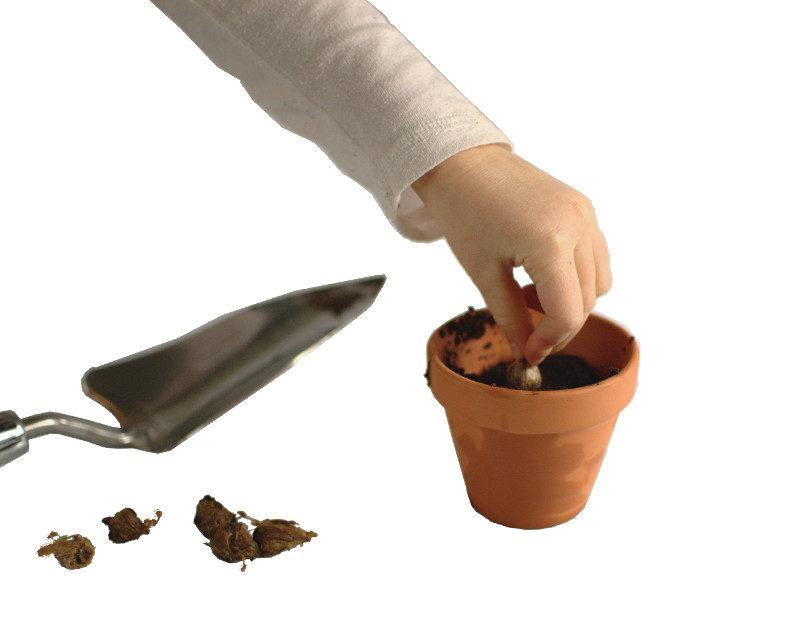 Sadzenie cebulek w doniczce i metalowa łopatka