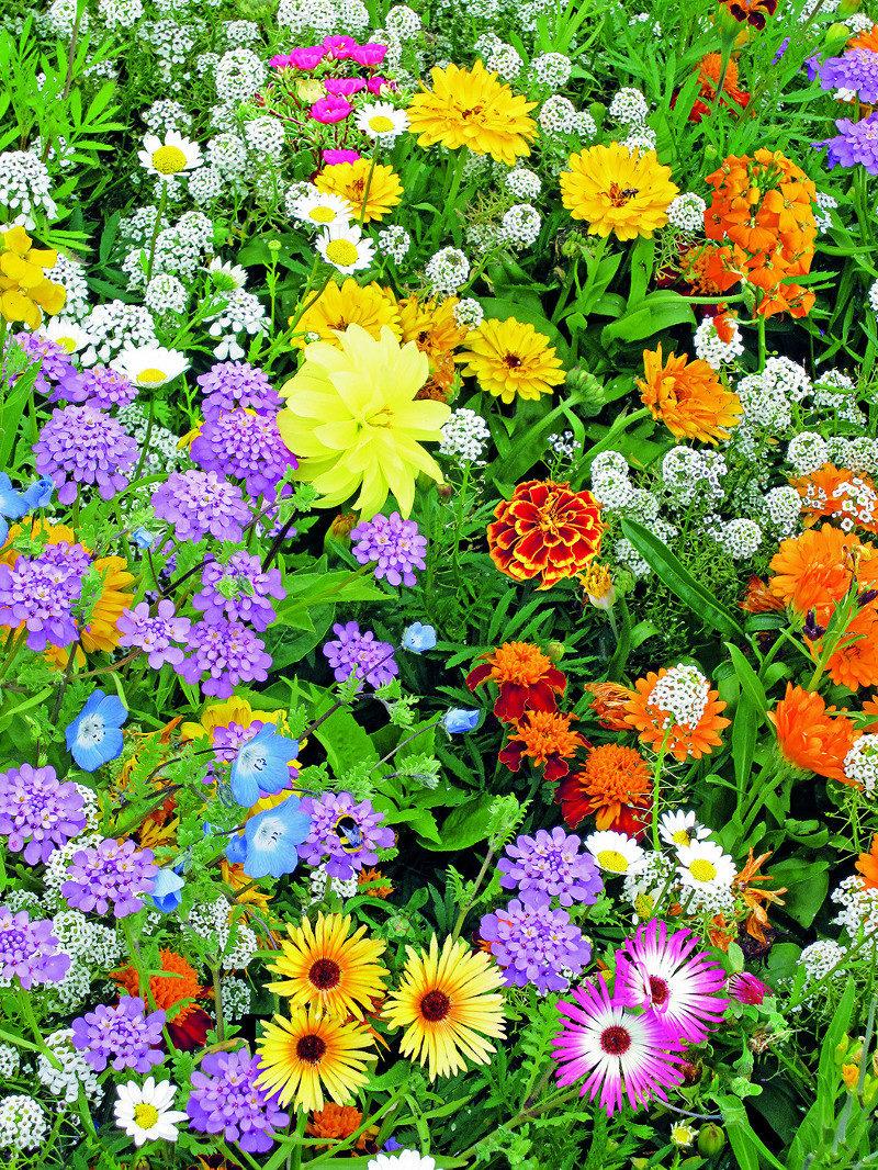 Nasiona kwiatów dla pszczół 1