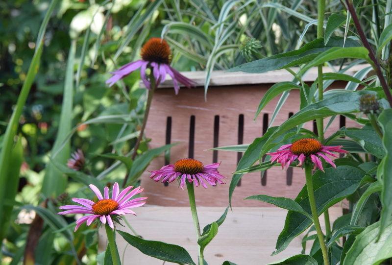 Gniazdo dla motyli, domek motyli, jeżówka
