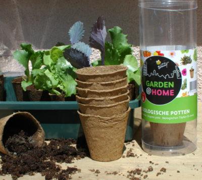 Doniczki torfowe można zakopać w ziemi wraz z rośliną, ponieważ szybko się rozkładają.