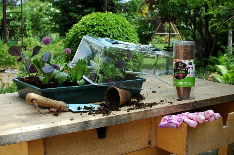 Doniczki torfowe są idealne do produkcji rozsady.