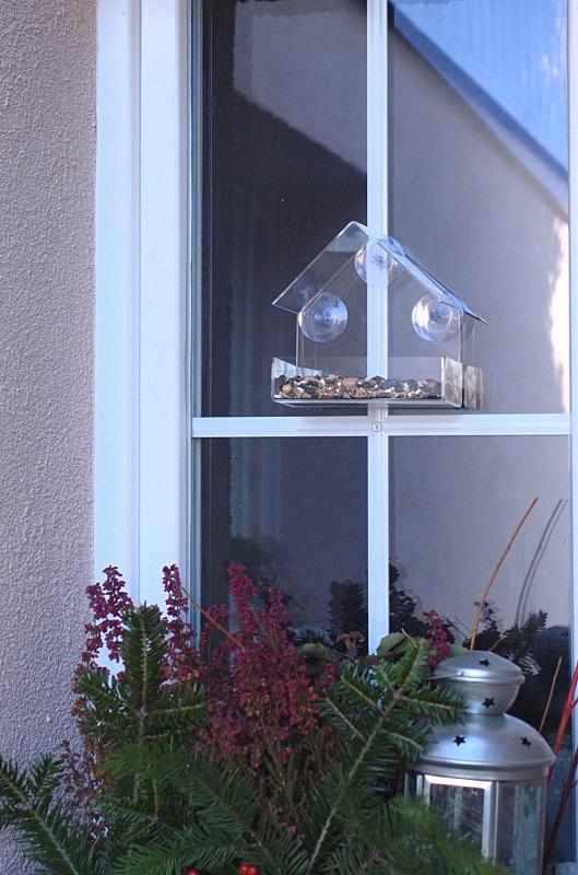 karmnik na szybę na oknie z ziarnem Semini
