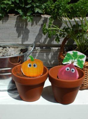 Zestaw do uprawy dyni i wesoły buraczek dla najmłodszych ogrodników