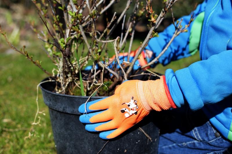 Dzieci pomagają w ogródku