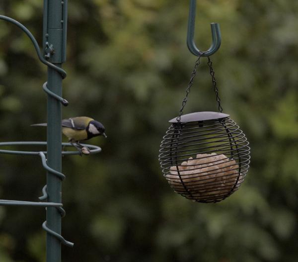 karmnik dla ptaków kula