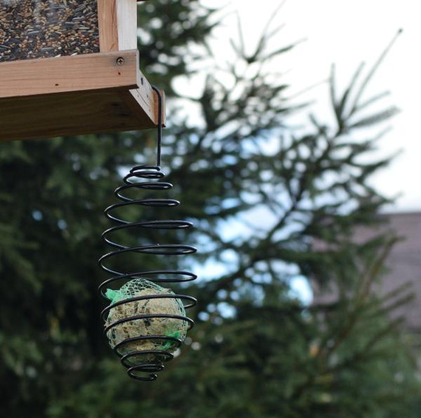 karmnik spiralny na kule tłuszczowe dla sikorek i dzikich ptaków