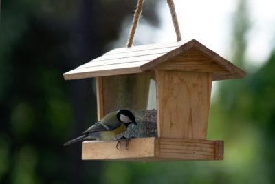 Karmnik dla ptaków z zasobnikiem