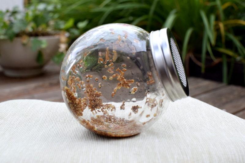 Kiełki lucerny pierwszego dnia w słoiku do kiełkowania