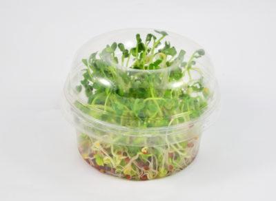 Kiełkownica biodegradowalna pełna gotowych kiełków rzodkieki po 3 dniach