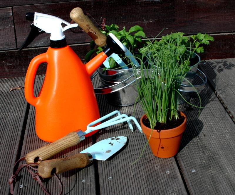 konewka ze spryskiwaczem, niebieskie narzędzi i zioła