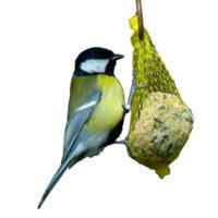 kule zimowe dla dzikich ptaków