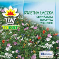 Nasiona kwiatów mieszanka Kwietna Łączka 1kg