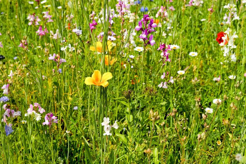 Nasiona roślin miododajnych dla pszczół mieszanka