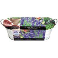 lawenda z nasion na okno zestaw do uprawy lawendy z nasion, metalowa stylowa doniczka, podłoże, nasiona